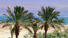 Dead See - Palm Trees Stock Footage