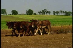 Amish boy in hat drives team of six plow horses in field near Lancaster Stock Footage