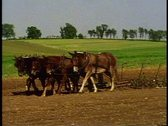 Stock Video Footage of Amish boy in hat drives team of six plow horses in field near Lancaster