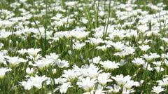 Springtime Meadow Stock Footage