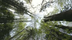 High trees of the forest Stock Footage