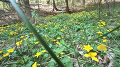 Walking in the yellow flowered forest Stock Footage