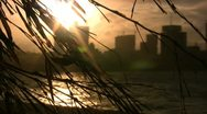 China - sunset behind twigs of a broom Stock Footage