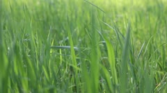 Refocus on the green grass field Stock Footage