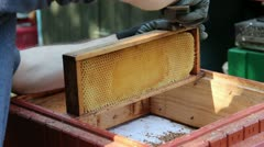 Beekeeper is cleaning frames from propolis and beeswax in apiary - stock footage
