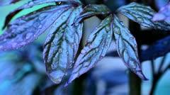 Rain drops on Garden plant Stock Footage