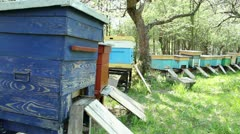 Bees and beehives. Beautiful spring in apiary. Stock Footage