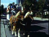 Copenhagen,  Horse drawn wagon for Carlsberg Brewery Stock Footage