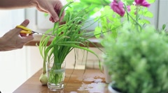 Female hand cutting fresh green chives with scissors HD Stock Footage