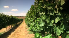 Grapevine 2 Stock Footage