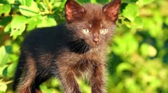 Little black kitten plaintively mew outdoor Stock Footage