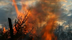 Burning trees, forest fire Stock Footage