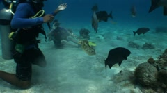 Divers Interact with Fish Stock Footage