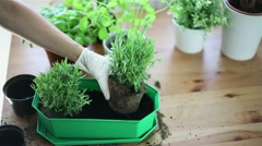 Gloved hands planting a seedling into flower pot HD - stock footage