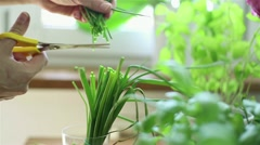 Hand cutting fresh green chives with scissors HD - stock footage