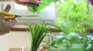 Stock Video Footage of Hand cutting fresh green chives with scissors HD