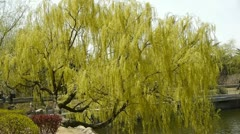 Dense willows by sparkling lake. Stock Footage
