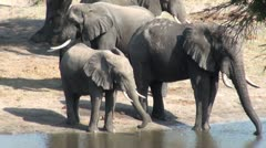 Elephants 52 - stock footage