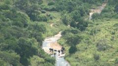 Elephants 56 Stock Footage
