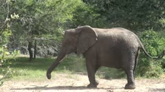 Elephants 72 Stock Footage