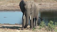 Elephants 74 Stock Footage