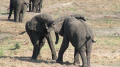 Elephants 83 Stock Footage