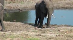 Elephants 89 Stock Footage