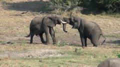Elephants 88 Stock Footage