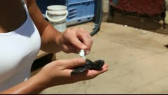 Volunteer at the Israel Sea Turtle Rescue and Rehabilitation Center, Michmoret Stock Footage