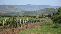 Crimean vineyards. Stock Footage