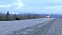 Truck Approaching Black Bear Walking off YT Highway Stock Footage
