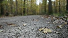 Leaf On Trail - stock footage