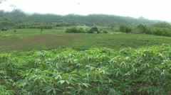 Cassava Field In Western Thailand-Right to Left Stock Footage