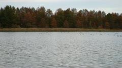 Steady Stream Birds In Water Stock Footage