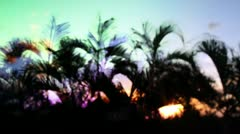 Palm trees shilouette sunset Stock Footage