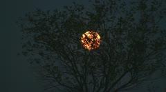 120506 Supermoon through the tree short Stock Footage
