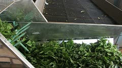 Production of tea Stock Footage