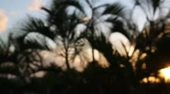 palm trees shilouette sunset - stock footage