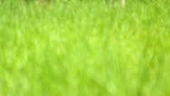 The greenery in the spring forest (grass) - stock footage
