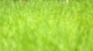 Stock Video Footage of The greenery in the spring forest (grass)