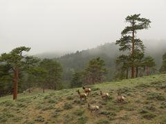 Deers in mountains Stock Photos