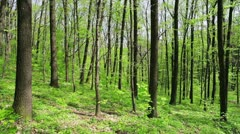 Deciduous (leaf) forest depths in sunny spring day Stock Footage