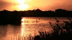 Bird in sunset in marsh Stock Footage