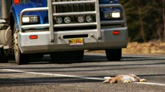 Roadkilled Bunny Hare with Passing Truck Stock Footage