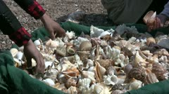 Selling exotic shells on the beach in China Stock Footage