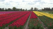 Stock Video Footage of Flower Fields - Gardener