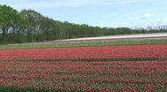 Stock Video Footage of Flower Fields Noordwijkerhout Bulb Region, The Netherlands