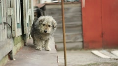 The dog wags his tail, uncertainly comes closer - stock footage