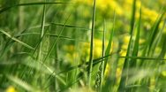 Fresh grass macro background Stock Footage
