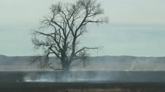 P01805 Tree and Grassland Fire Stock Footage